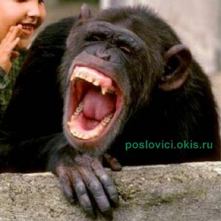 Анекдоты дня смех - Женский клуб.